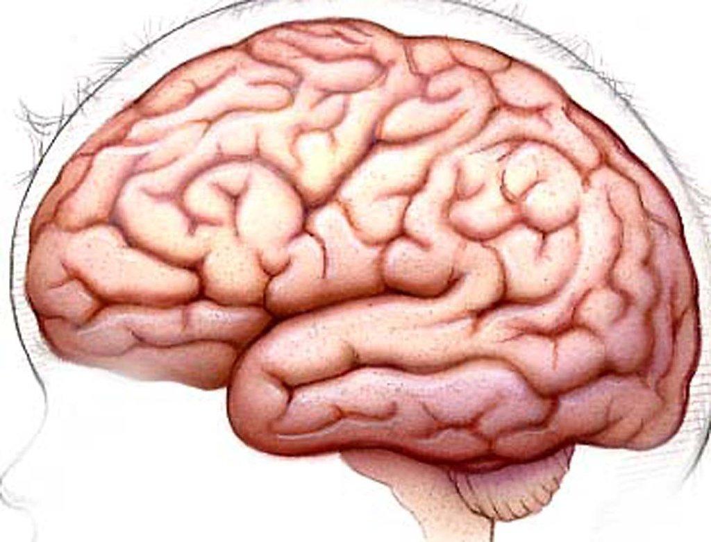 Hofkin-Hedge-Brain4H.jpg