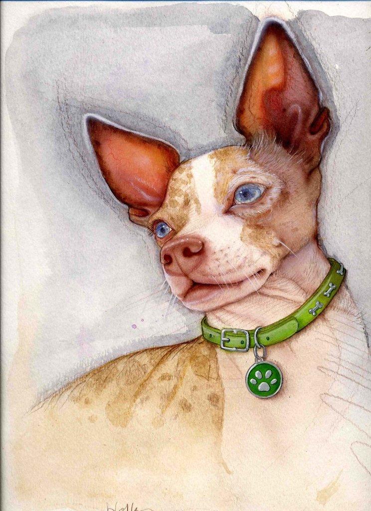 Hofkin-Chihuahua.jpg