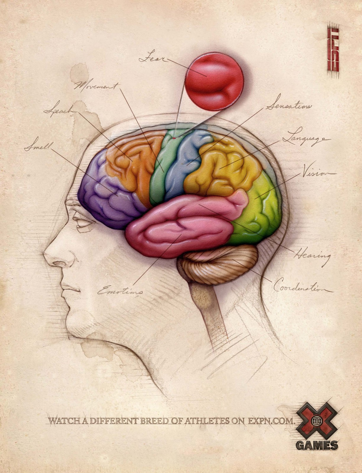Brain - Bonnie Hofkin - Fine Art & Illustration