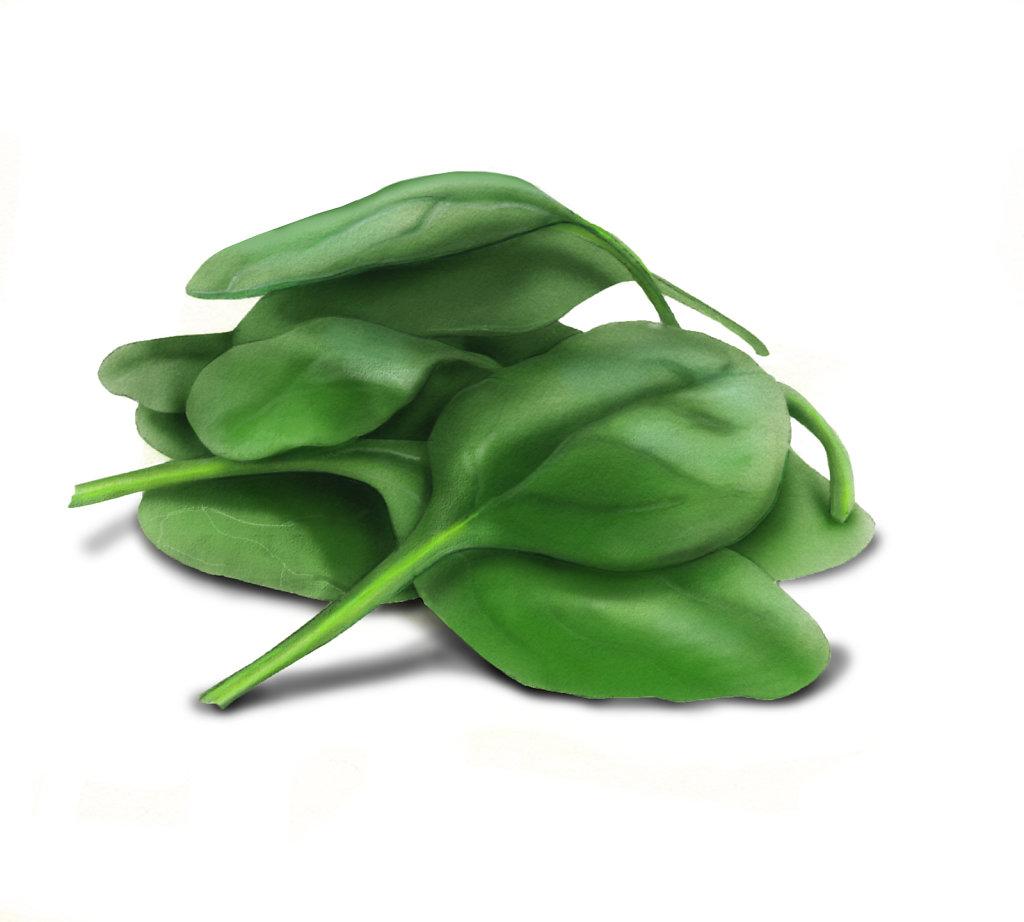 Hofkin-Hedge-PotbMedChSal-SpinachF1c.jpg